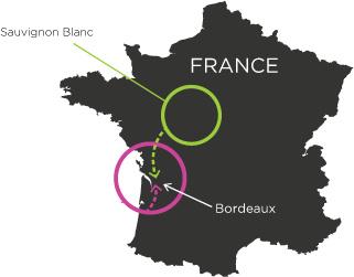 Merlot výskyt Francie