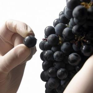 Třísloviny ve víně